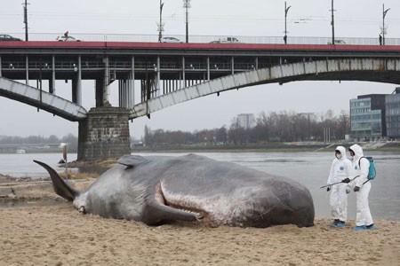 عکسهای جالب,عکسهای جذاب, مجسمه یک نهنگ