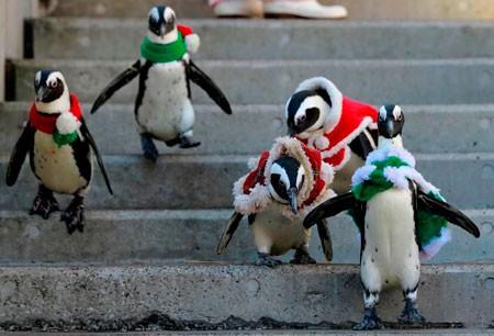 عکسهای جالب,عکسهای جذاب,پنگوئن