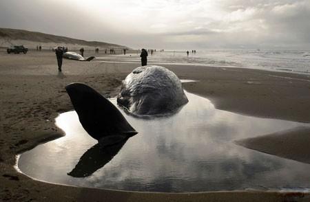 عکسهای جالب,عکسهای جذاب, به گل نشستن نهنگ