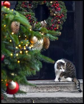 عکسهای جالب,عکسهای جذاب,درخت کریسمس