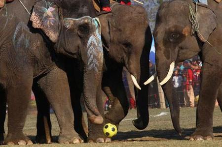 عکسهای جالب,عکسهای جذاب,لیگ فوتبال فیل ها