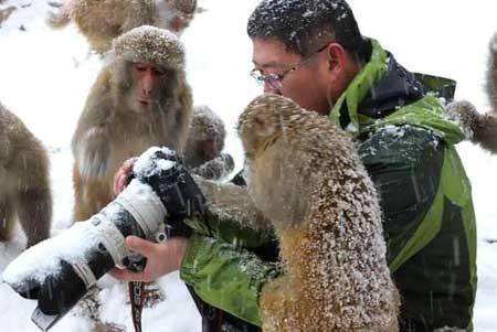 عکسهای جالب,عکسهای جذاب,میمون های کنجکاو