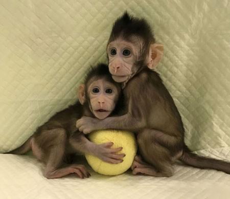 عکسهای جالب,عکسهای جذاب,بچه میمون