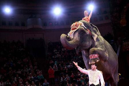 عکسهای جالب,عکسهای جذاب,سیرک ملی
