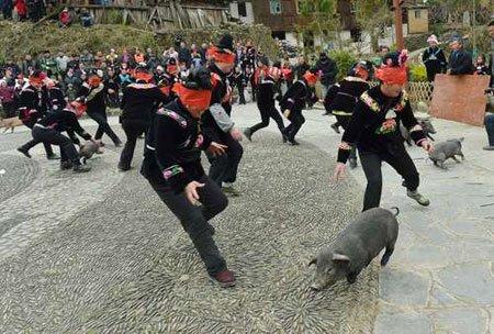 عکسهای جالب,عکسهای جذاب,مسابقه گرفتن خوک