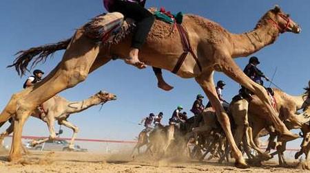 عکسهای جالب,عکسهای جذاب,مسابقه شترسواری