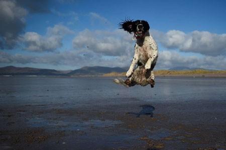 عکسهای جالب,عکسهای جذاب,پرش یک سگ