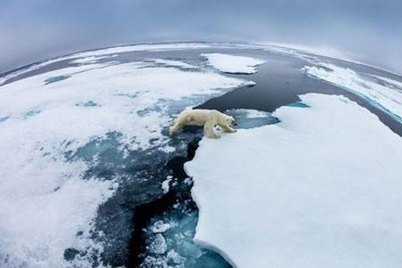 عکسهاي جالب,عکسهاي جذاب, خرس قطبي