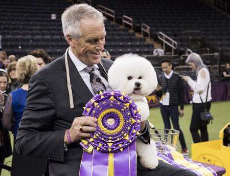عکسهای جالب,عکسهای جذاب,سگ برنده