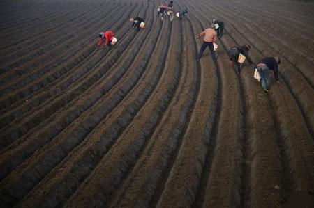 عکسهای جالب,عکسهای جذاب, کشاورزان