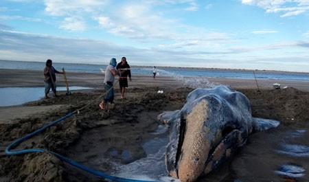 عکسهاي جالب,عکسهاي جذاب, نهنگ خاکستري