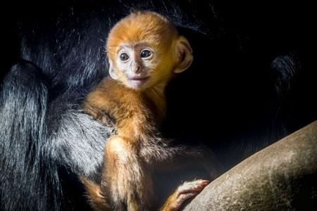 عکسهای جالب,عکسهای جذاب ,میمون کوچک