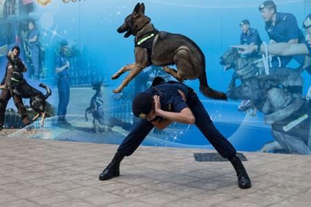 عکسهاي جالب,عکسهاي جذاب,سگ هاي پليس