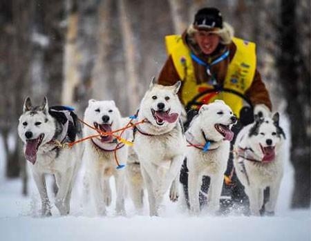 عکسهای جالب,عکسهای جذاب, سگهای سورتمهران