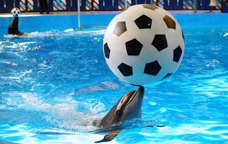 عکسهای جالب,عکسهای جذاب,دلفینها