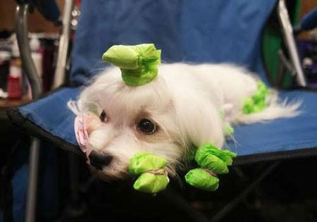 عکسهای جالب,عکسهای جذاب , سگ های خانگی
