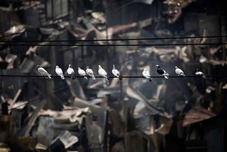 عکسهاي جالب,عکسهاي جذاب,کبوتر