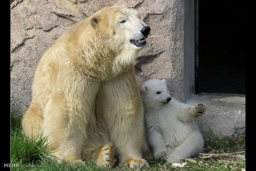 اخبار,اخبار گوناگون,حس مادری در میان حیوانات
