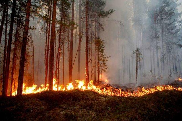 اخبار حوادث,خبرهای حوادث ,آتشسوزی سوئد