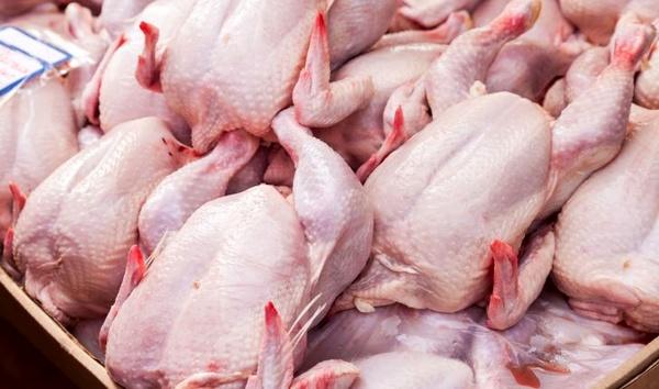 ادامه سیر نزولی مرغ در بازار/کاهش قیمت جوجه یکروزه تولید مرغ را افزایش داد