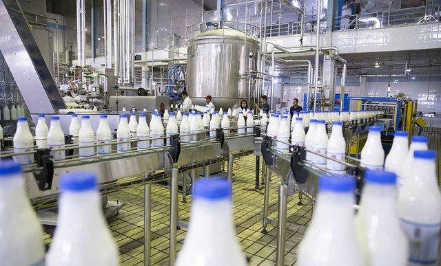 شیر گرانتر میشود/ به دوغ نشاسته میزنند