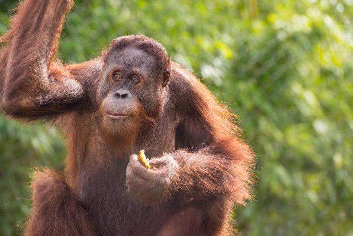 اخبار,اخبارگوناگون, حیواناتی که میتوانند حرف بزنند