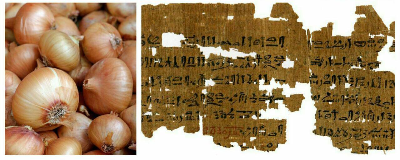 عجیب ترین تست بارداری در مصر باستان