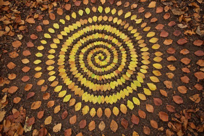 اخبار,اخبار گوناگون, هنرنمایی بسیار زیبا با برگ ها و سنگ ها