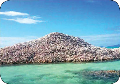 اخبار,اخبار گوناگون,جزیره ساخته شده ازصدف حلزونی