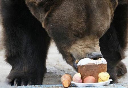 عکسهاي جالب,عکسهاي جذاب,خرس