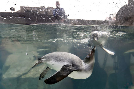 عکسهاي جالب,عکسهاي جذاب,پنگوئن