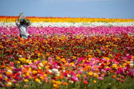 عکسهای جالب,عکسهای جذاب, گلها