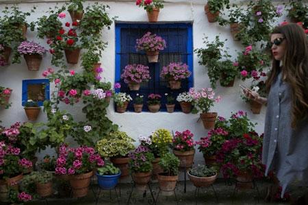 عکسهای جالب,عکسهای جذاب,جشنواره سنتی گلدانها