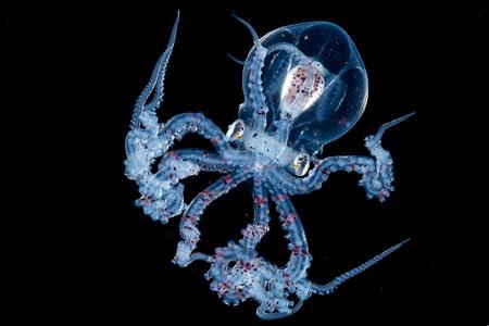عکسهای جالب,عکسهای جذاب,جانور دریایی