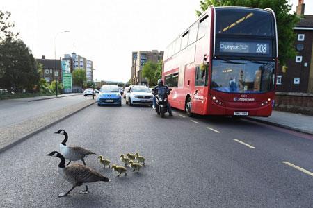 عکسهاي جالب,عکسهاي جذاب,اردک