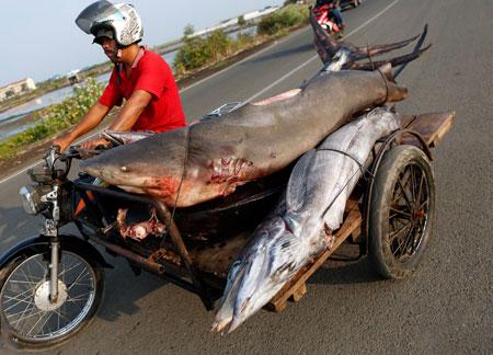 عکسهای جالب,عکسهای جذاب, ماهیگیر