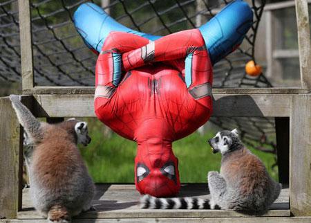 عکسهاي جالب,عکسهاي جذاب, مرد عنکبوتي