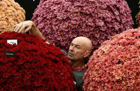 عکسهاي جالب,عکسهاي جذاب, جشنواره گل
