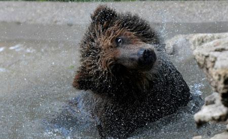 عکسهای جالب,عکسهای جذاب, خرس جوان
