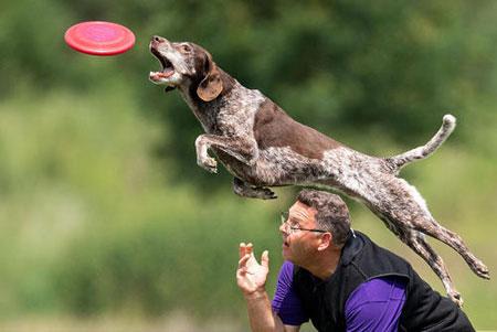 عکسهای جالب,عکسهای جذاب,مسابقات سگها
