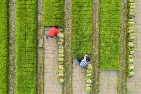 عکسهای جالب,عکسهای جذاب, کشاورزی