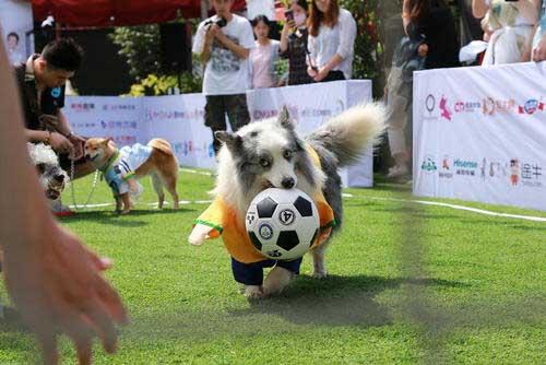 عکسهاي جالب,عکسهاي جذاب, فوتبال سگها
