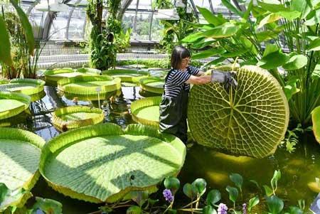 عکسهای جالب,عکسهای جذاب, گیاه شناسی