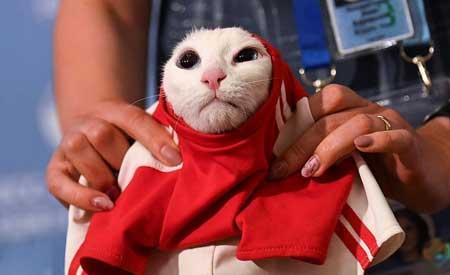 عکسهاي جالب,عکسهاي جذاب, گربه