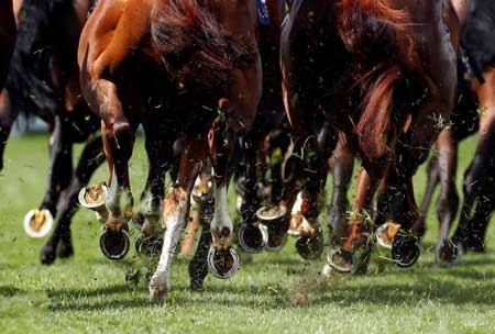 عکسهای جالب,عکسهای جذاب,پاهای اسب ها