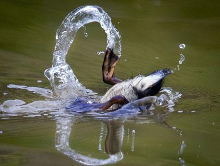 عکسهاي جالب,عکسهاي جذاب, جوجه اردک