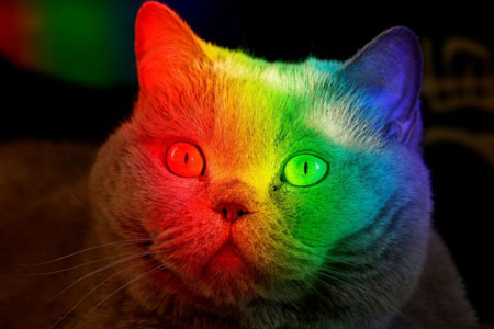 عکسهای جالب,عکسهای جذاب,گربه