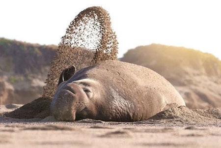 عکسهای جالب,عکسهای جذاب, فیل دریایی