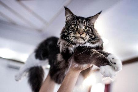 عکسهای جالب,عکسهای جذاب,ه گربههای خانگی
