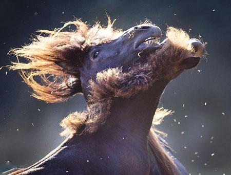 عکسهای جالب,عکسهای جذاب, اسب